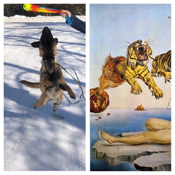 Косплей Дали Собака, Дали, Прыжок