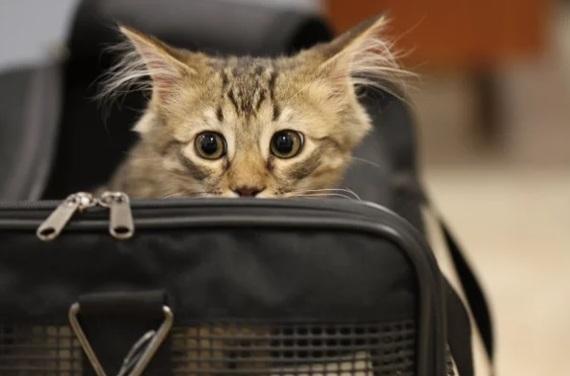 Кот залез в сумку и выпрыгнул в аудитории в институте, но преподаватель не был против такого поворота событий. Животные, Кот, Институт, Метро, Учеба, Преподаватель, История, Рассказ
