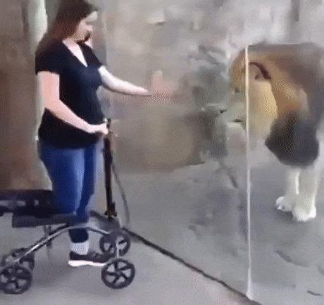 Девушка думала, что она делится глубоким моментом со львом, но у него были другие планы