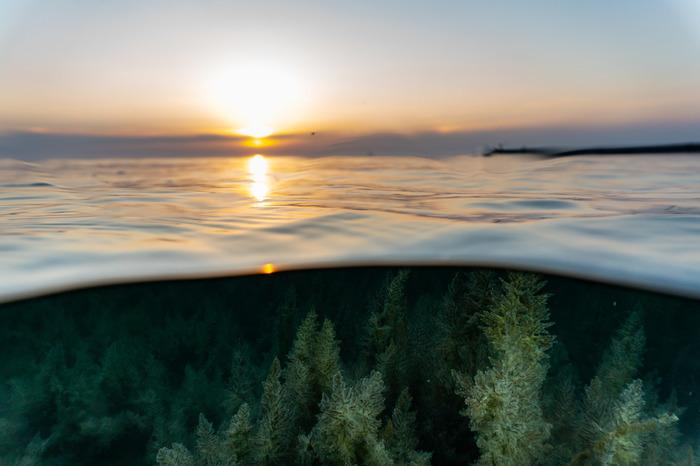 Подводная растительность на закате Анапа, Черное море, Закат, Море, Подводный мир, Природа, Природа России, Фотография, Длиннопост