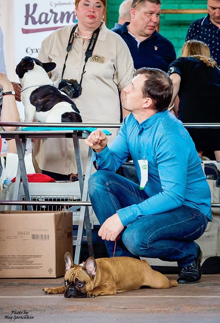 Очередная серия репортажных снимков с выставок собак, прошедших по Югу России в 2018 году, приятного просмотра))) Собака, Собаки и люди, Выставка, Выставка собак, Анималистика, Длиннопост