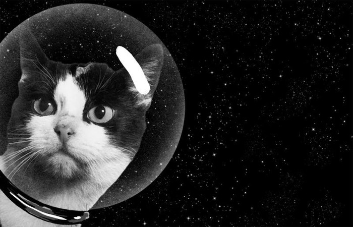 Кошка космонавт! Кот, Космос, Астронавт, Длиннопост