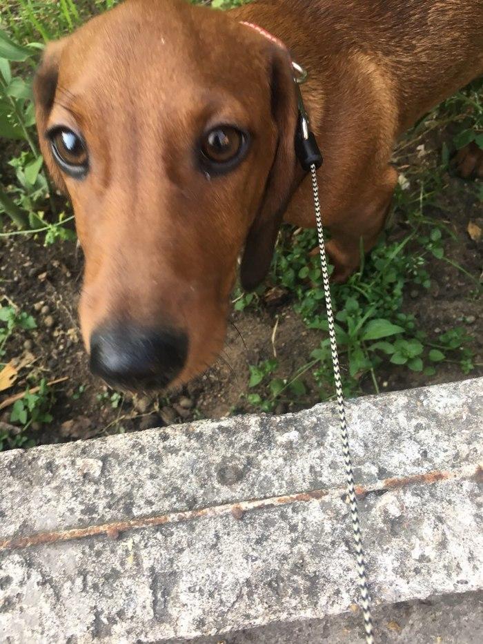Пропала собака! Пикабу, помоги [UPD: найдена] Пропала собака, Люберцы, Москва, Без рейтинга, Длиннопост, Помощь, Собака, Помогите найти