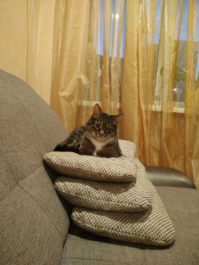 Про котиков...тираны! Любовь к животным, Питомец, Кот