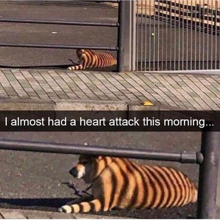 У меня чуть не случился сердечный приступ