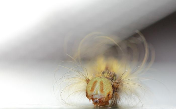 Универсальный метод определения пола у будущих бабочек разработали в Новосибирске Академгородок, Энтомология, Бабочка, Копипаста, Длиннопост