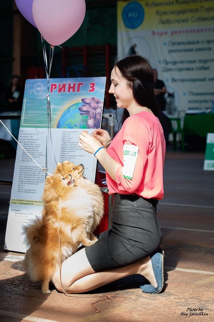 Продолжаю публиковать репортажные снимки с выставок собак, прошедших по Югу России в 2018 году, приятного просмотра))) Собака, Собаки и люди, Выставка, Выставка собак, Анималистика, Фотограф анималист, Длиннопост