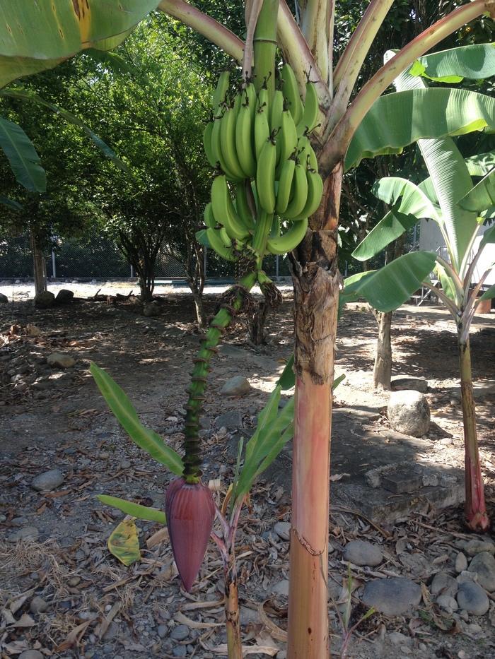 Любителям экзотики Животные Эквадора, Банан, Игуана, Паук, Длиннопост