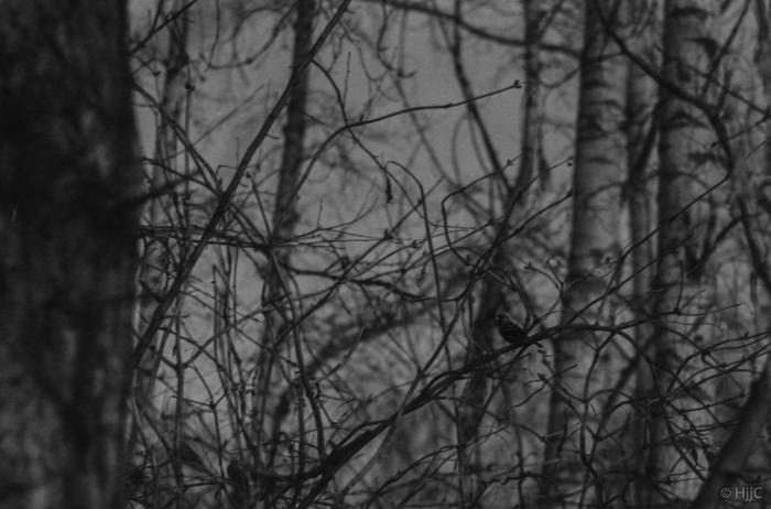 Совсем совсем не мюсли Начинающий фотограф, Фома, Исо400, Черно-Белое, Challenge, Баловство, Длиннопост