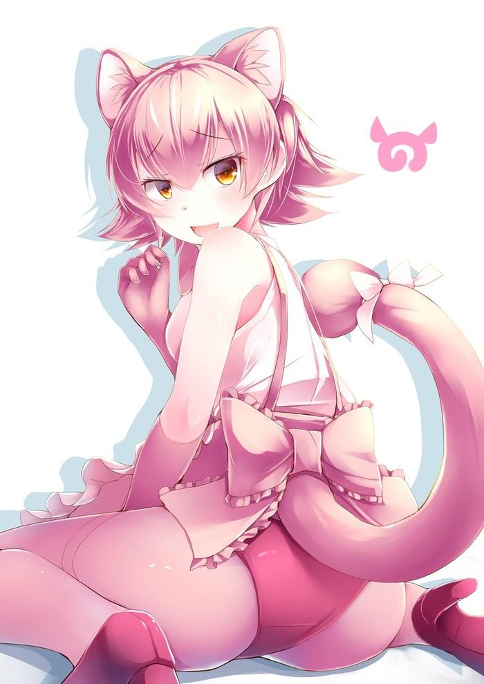 Anime Art Аниме, Anime Art, Kemono Friends, Peach panther, Animal Ears
