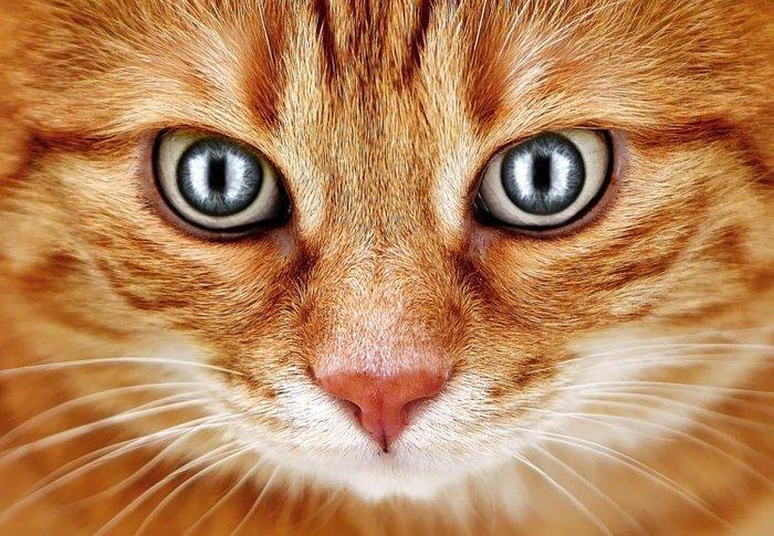 А я всегда это подозревал! Кот, Котомафия, Ученые, Инопланетяне, Слежка