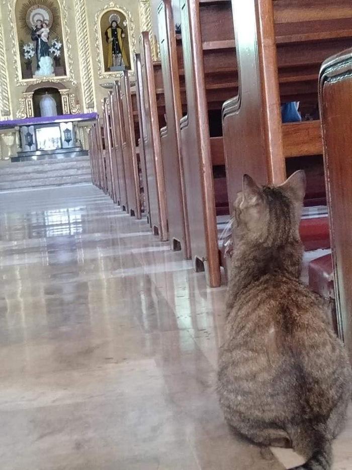Картинка коту пора в церковь