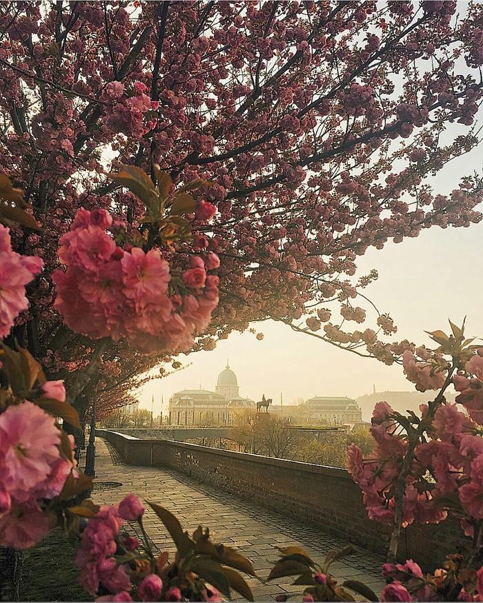 Венгрия весной фото