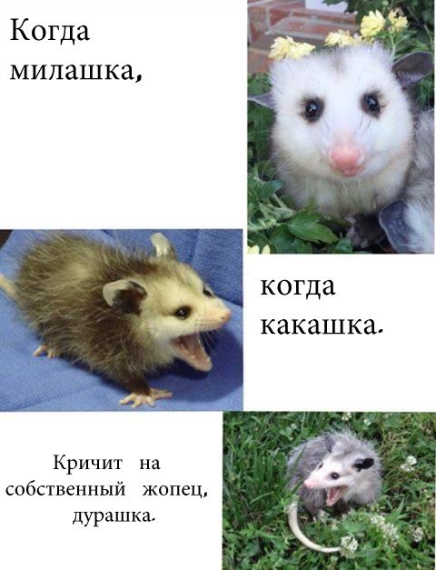 Possum Possum, Мемы