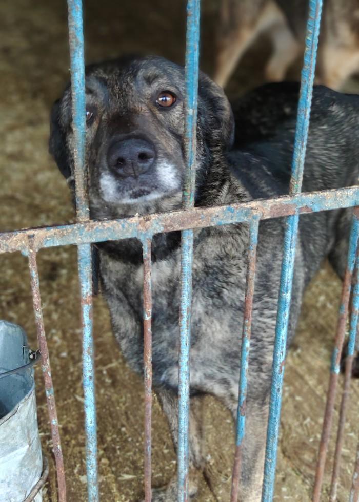 Панакота, а по другому - собака-электровеник Лучший друг, Бездомные животные, В добрые руки, Ищу дом, Видео, Длиннопост, Собака, Приют для животных