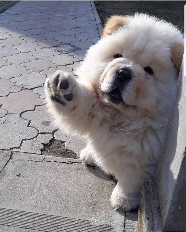 Дай руку, человек, пока я не передумал