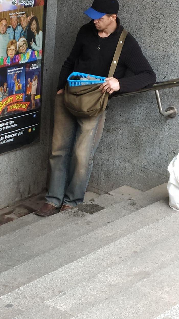 Попрошайка в метро мучает котят Животные, Попрошайки, Метро, Харьков, Украина, Защита животных, Длиннопост, Без рейтинга, Кот