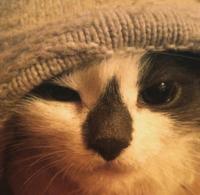 До встречи, Кошка! Кот, Негатив, Смерть, Домашний любимец
