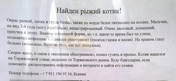 Я человек простой. Просят помочь котику - не могу пройти мимо. Кот, Без рейтинга, Найденыш, Котомафия, Санкт-Петербург, Рыжий, Найден кот
