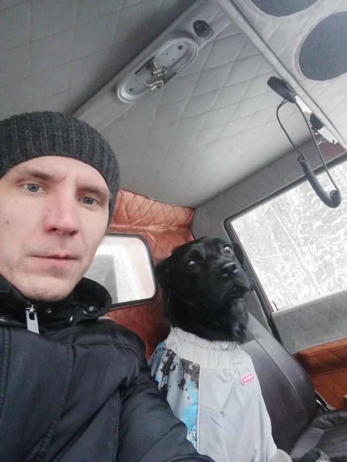 Автоэвакуатор с антидепрессантом Собака, Антидепрессант, Помощь на дорогах, Добрые люди