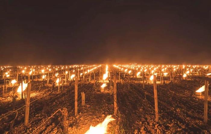 Костры горят на французских виноградниках, чтобы защитить их от мороза Reddit, Фотография, Франция, Виноградник, Огонь
