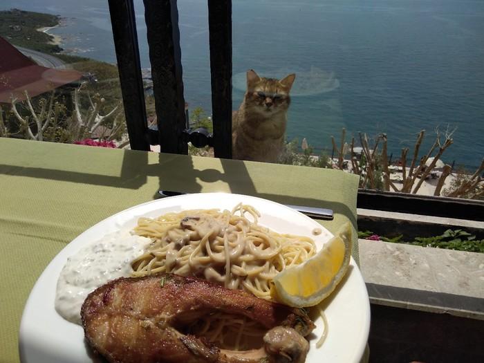 Грусть печаль в одном фото 2 Кот, Котомафия, Голод, Море, Еда