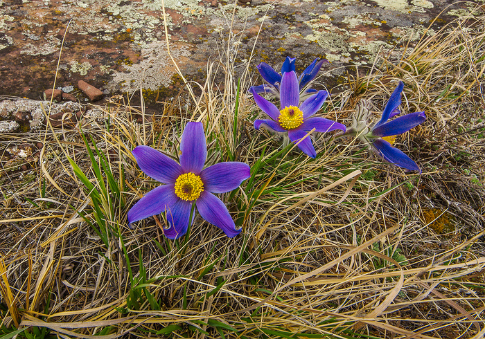 Сундуки в апреле Хакасия, Цветы, Весна, Активный отдых, Отдых на природе, Сундук, Длиннопост