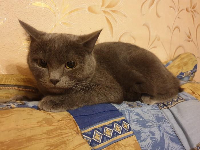 Барнаул. Найдена кошка Барнаул, Животные, Кот, Найден кот