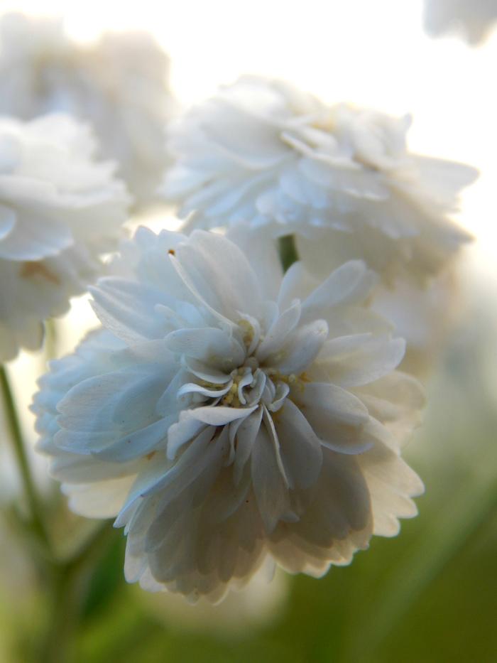 Макро Фотография, Начинающий фотограф, Макро, Цветы, Растения, Длиннопост