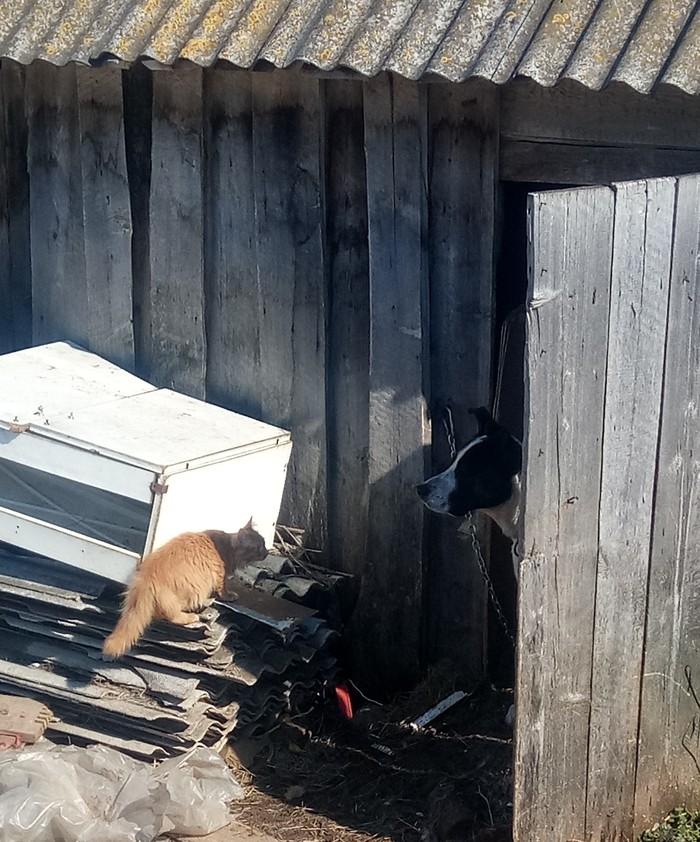 Котей Животные, Кот, Пёс Барбос, Фото на тапок, Всем добра, Длиннопост