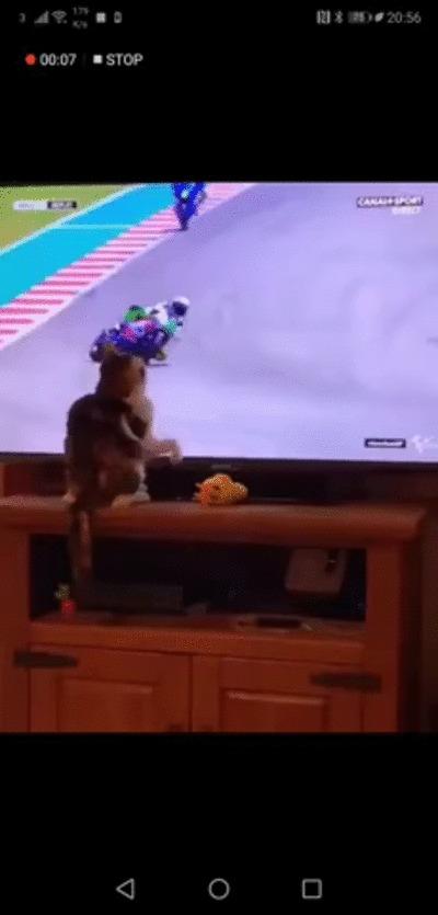 Кот телепат.