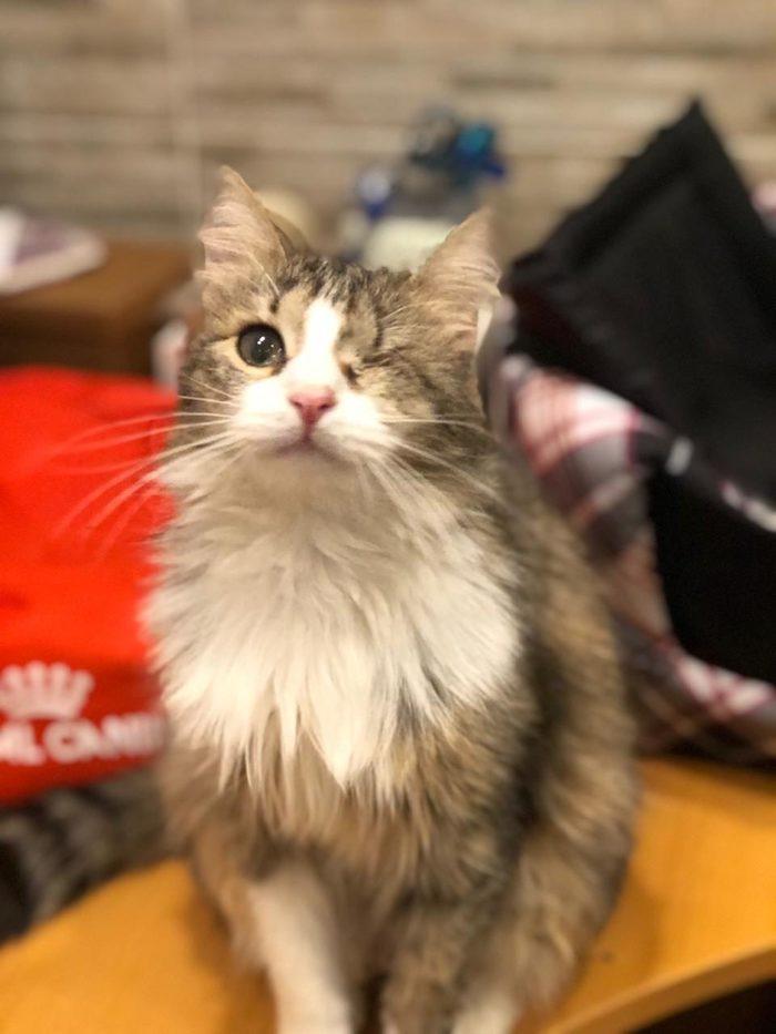 Особенная кошечка ищет дом!!! Кошка Моди, Москва, Кот, В добрые руки, Длиннопост, Ищу дом, Без рейтинга