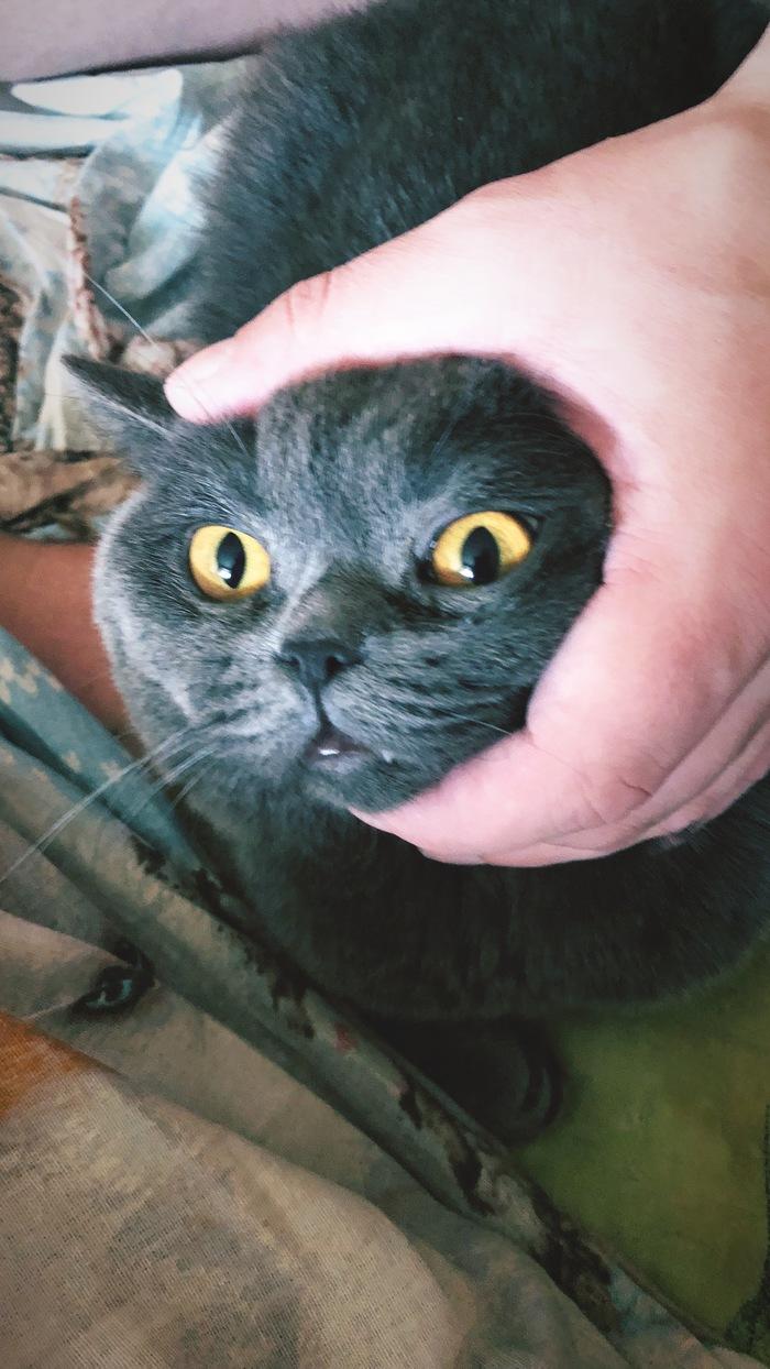 Котика тискают