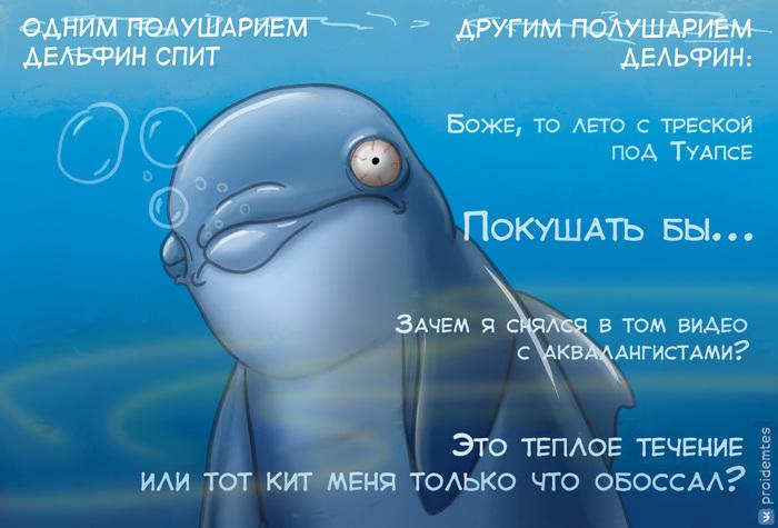 Сон дельфина Proidemtes, Сон, Дельфин, Шутка, Картинка с текстом, Юмор