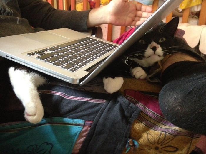 Всё относительно. Кот, Ноутбук, Многовариантность бытия