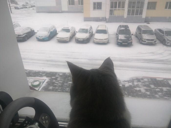 Погода за окном. Хабаровск, Снег, Погода, Плохое качество, Кот