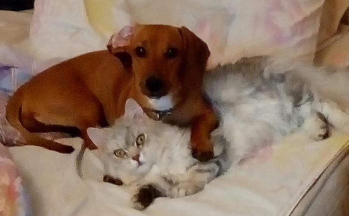 Котики и собачки!Собачка не против, а кот в шоке!