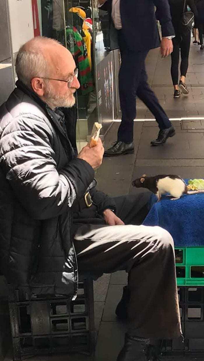 У сиднейского бездомного пропала любимая крыска Люси. Помочь ему решил практически весь город! Бомж, Крыса, Сидней, Австралия, Доброта, Длиннопост