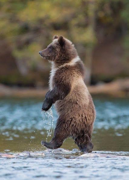 Идущий по воде