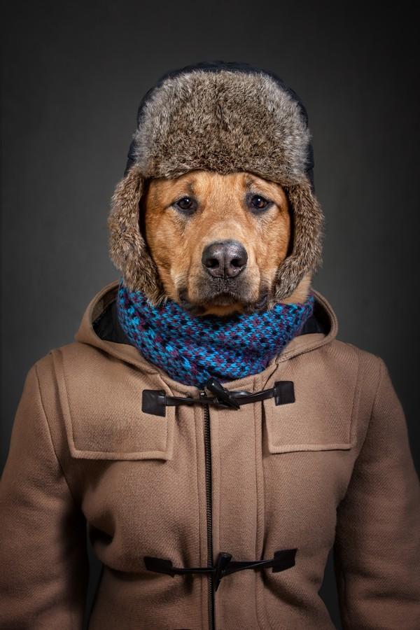 Собаки-Люди Собакилюди, Смешные животные, Собаки и люди, Фотография, Фотопроект, Собака, Одежда, Одежда для животных, Длиннопост