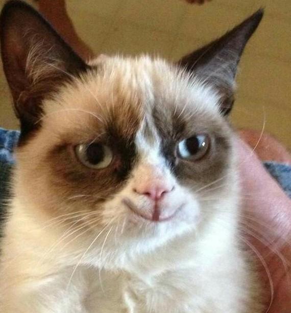 Коты, коты, коты... Котомафия, Кот