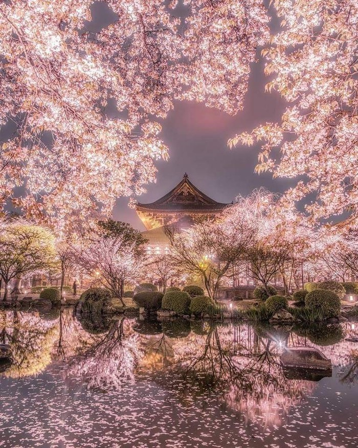 Япония Япония, Сакура, Весна, Длиннопост