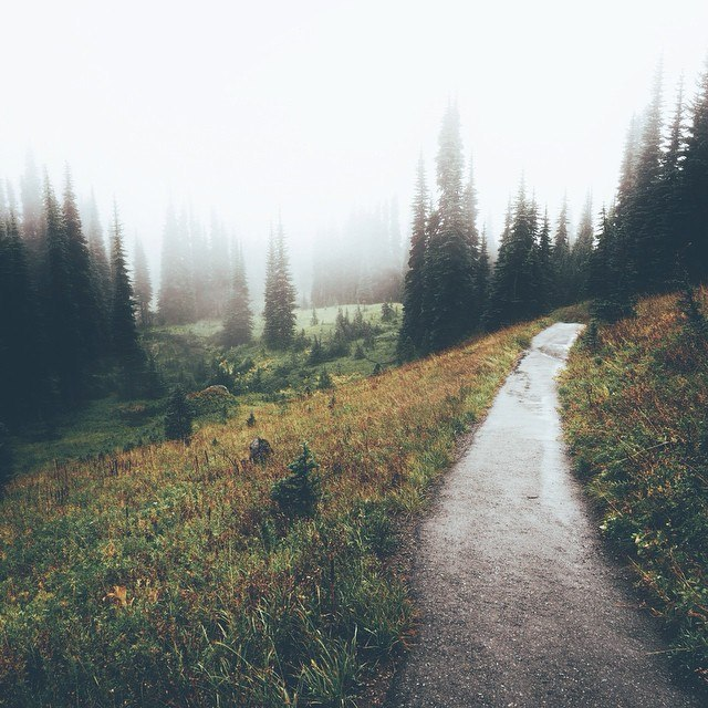 Туман Дорога, Лес, Дерево, Длиннопост, Природа