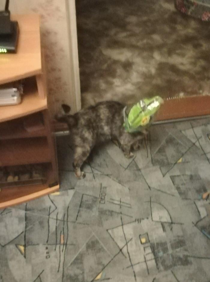 Кот в мешке Кот, Фото на тапок