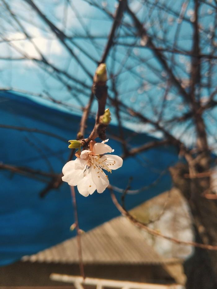 Весна пришла :)
