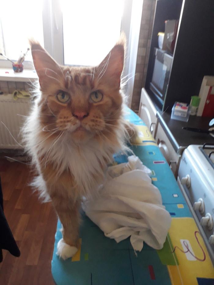 """""""Погладь кота"""" Кот, Домашнее, Домашний любимец, Погладь кота"""