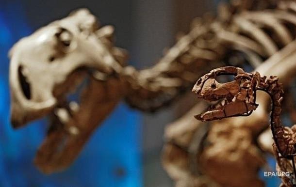 Тиранозавры нынче в цене Динозавры, Рекс, Аукционы, Ебей США, Палеонтология