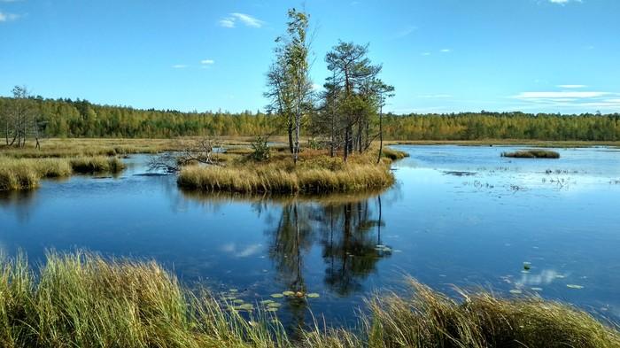Национальный заповедник Угра Угра, Болото, Осень, Природа
