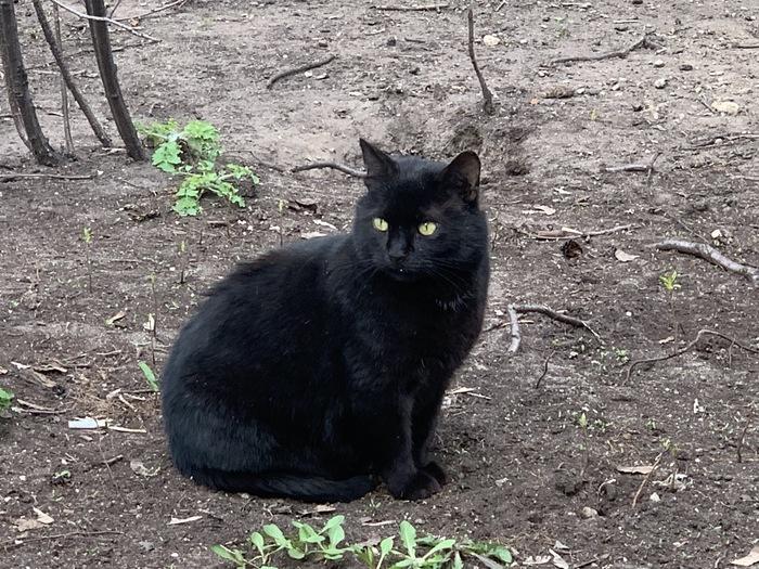 Весна идет. Котам дорогу Котомафия, Черный кот, Кот