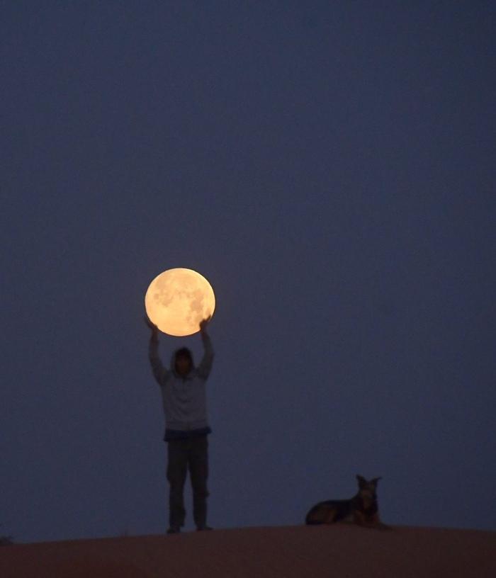 Полнолуние в Японии. 19.04.19 Луна, Полнолуние, Собака, Собаки и люди, Длиннопост